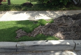 synthetic grass countoured around tree roots