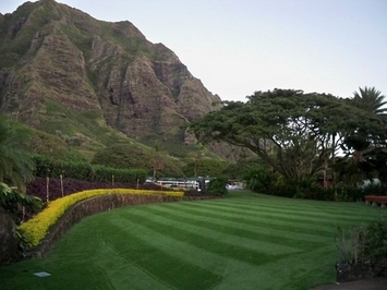 Commercial Kualoa ranch Synthetic lawn